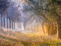 The Unexpected (Ellen van den Doel) Tags: grass december zonsopkomst natuur sunrise waard nature outdoor trees zonsopgang bomen landschap hoarfrost hoeksche glow rijp 2019 landscape winter strijen zuidholland nederland