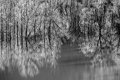 Premier frimas... First cold weather... #E-M10MarkII #Gimp #DigiKam (ImAges ImprObables) Tags: drôme auvergnerhônealpes eau lac rivière commune bouvantelehaut lalyonne reflet arbre givre frimas lacartificiel lacdebouvantelehaut blackandwhite bw noiretblanc gimp nb traitement digikam olympusm40150mmf4056r olympusem10markii vercors royansvercors
