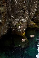 IMG_6533 (HeatherPubols) Tags: iceland europe thingvellirnationalpark