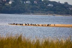 _U7A7423 (rpealit) Tags: scenery wildlife nature sandy hook gateway national recreation area