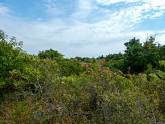 P1060783 (rpealit) Tags: scenery wildlife nature sandy hook gateway national recreation area