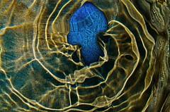 Medusa_iiiiii (Vlodz) Tags: abstract surreal