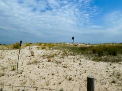 P1060790 (rpealit) Tags: scenery wildlife nature sandy hook gateway national recreation area lifeguard station