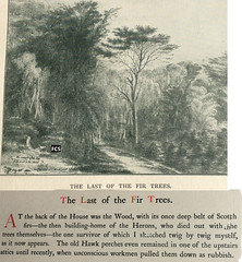 Southport Old Rd Formby Wood 1844  Last Scotch  Fir Trees Sketch  Home Of Herons Joined_cr (Formby Civic Society) Tags: southportoldroad formbywood carherinejacson formbyreminiscences scotchpine heron formby merseyside formbyhall