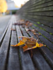 Auf der langen Bank (michaelmueller410) Tags: bank bench leaves leaf blatt ahorn maple park kurpark bad oeynhausen herbst autumn fall nrw germany