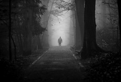 [Dans la brume...] (Mads92i) Tags: nature blackandwhite noiretblanc nikon seul alone homme chien man dog abres tree sombre dark darkness horror mysterious mystérieux nikkor chemin brume brumeux brouillard mist forest magic magical