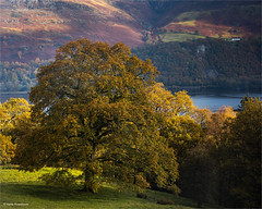 Autumn light in the Lake District (He Ro.) Tags: derwentwater lakedistrict lakedistrictnp autumn autumnalcolours tree hill ashnessfarm water view autumnlight golden england uk cumbria newlands