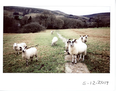 Don't act all innocent (ronet) Tags: fuji thursdaywalk barn edale field film fujiinstax500af instantfilm instax kinderscout peakdistrict scanned utata