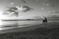 Horse n'Rider (Reto Togni Pogliorini) Tags: colombia providencia southwestbeachprovidencia beach bw horse rider sunset peaceful peace nikon d700