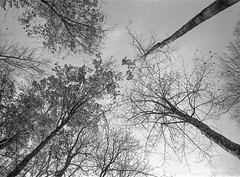 Cliché that always works for me. (wojszyca) Tags: fuji gsw680iii 6x8 120 mediumformat fujinon sw 65mm kodak tmax 400 400tmy2 hc110 epson v800 nature sky tree forest treetops branches leaves mountains hike
