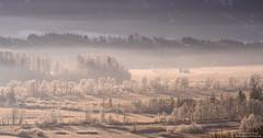 Winter morning at Loisachtal (Bernhard_Thum) Tags: bernhardthum thum nikonz7 carlzeiss sonnar1352zf sonnart2135 nature alps earlymorning loisachtal hoarfrost