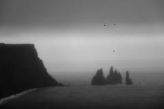 Flying in the rain (Evolved Vision) Tags: fujifilmxt3 fujinonxf50140mmf28 iceland bw blackandwhite birds beach seascape