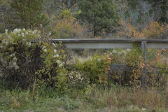 Down the line (Rocky Pix) Tags: downtheline apple valley highway morning trees brush wood fence autumn trekking applevalleyanteloperoad denverbotanicgardens pastoral lyons boulder county colorado foothills rockies rockypix rocky mountain pix wmichelkiteley f16 150thsec 55mm 1870mmf3545 nikkor normalzoom monopod