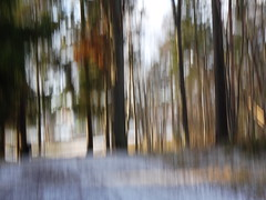 Winter at its best (evisdotter) Tags: winteratitsbest trees snow light nature sooc icm intentionalcameramovement