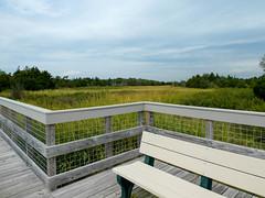 P1060786 (rpealit) Tags: scenery wildlife nature sandy hook gateway national recreation area