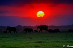 P.N. AMBOSELI (RLuna (Instagram @rluna1982)) Tags: kenya africa fauna naturaleza elefante masai amboseli safari viaje vacaciones holidays photo canon rluna rluna1982 karibu hakunamatata polepole wildlife sunset sunrise sun kenianairlines instagram flysafarilink offroad spotlight instagramapp photography natural shadows silhouette