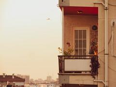 (metek737) Tags: flower city life serenity sunset