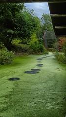 Circles (jo.misere) Tags: groen green water gaja park dierentuin