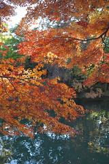DSCF1172 (tohru_nishimura) Tags: xe3 xf2728 fujifilm higashifushimi tokyo japan
