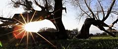 On adore plutôt le soleil levant que le soleil couchant. (Un jour en France) Tags: soleil soleillevant coucherdesoleil nature couleur canoneos6dmarkii canonef1635mmf28liiusm bocage arbre tree