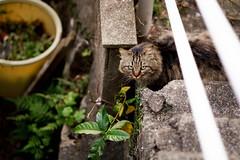 oh nose a cat (doktor P) Tags: nagasaki japan