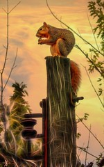 Wichita Lineman (TicKavich) Tags: squirrel post electricity sky sunrise missouri lineman insulator animals