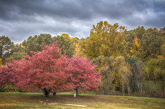 Cane Creek Park (donnieking1811) Tags: tennessee cookeville canecreekpark outdoors landscape park trees sky clouds hdr canon 60d lightroom photomatixpro