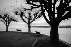 am Bodensee bei Konstanz (andreas.zachmann) Tags: bäume deu parkbank baum herbst himmel weg konstanz wolkendecke petershausenost ufer bodensee wasser badenwürttemberg deutschland