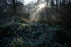 Misty, frosty morning, Albrighton and Donington LNR (Dave_A_2007) Tags: frost landscape mist albrighton