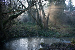 Misty, frosty morning, Albrighton and Donington LNR (Dave_A_2007) Tags: frost landscape mist stream water albrighton