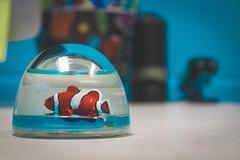 Fish on my desk - 178/365