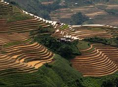 Farmhouse Among the Terraces (Les Koppe Photography) Tags: vietnam hàgiangprovince yênminhdistrict đồngvănkarstplateau landscape riceterraces