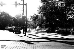 Ontario - de Lorimier (Denis Hébert) Tags: anthropogeo denishébert faubourgàmlasse centresud montreal montréal quebec québec canada city ville arbres trees auto car lampost lampadaire ombre shadow noiretblanc nb blackandwhite blackwhite bw coin corner 2019 juillet july été summer rue street rueontario rueontariostreet delorimier scènederue