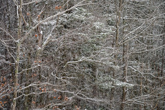 Vermont December 2019 (willsdad48) Tags: vermont newengland snowstorm snowscape woodlands 802 nikon nikonz6 waterfalls forest hiking nature natural landscape landscapephotography travel travelphotography