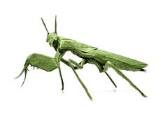 Boxer Mantis - Manuel Sirgo (Mariano Zavala B) Tags: boxer mantis manuel sirgo tutorial origami praying insect