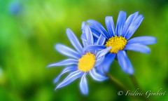 Linked (frederic.gombert) Tags: flower flowers blue light macro sony color green sun autumn fall