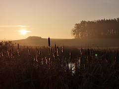 Early in the morning (bianca 11) Tags: morgenlicht morgenstille drausen aufdemland feld teich schilf schilfrohr schilfromantik morgensonne sonnenaufgang dunst landschaft landleben deutschland german germany morninglight countrylife landscape sunrise mvnow