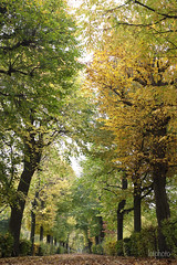 _LC31856_resized (lctphoto) Tags: autumn trees leaves green yellow