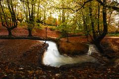 mystic river (marian ortega) Tags: otzarreta paísvasco hayedo naturaleza naturephotography nature riachuelo agua latierraunparaiso rio arbolado bosque largaexposición lanscape river water