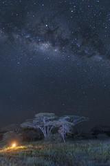 Milkyway over Acacia Tree (ms2thdr) Tags: africa safari tanzania milkyway sky night landscape landscapeastrophotography ndutu