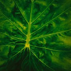Check the Meaning (Tom Levold (www.levold.de/photosphere)) Tags: fuji paris xpro2 xf18mmf2 nature blatt green grün leaf natur