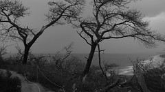 Black (Rand Luv'n Life) Tags: odc our daily challenge black dead torrey pines monochrome outdoor trees silhouette ocean waves branches trail