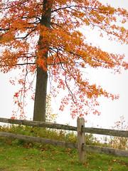 The edge of the earth (kuddlyteddybear2004) Tags: lakeerie saybrooktownshippark saybrook ohio fall autumn
