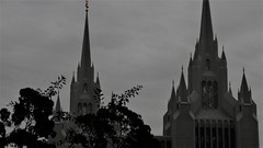 The Half of It (Rand Luv'n Life) Tags: odc our daily challenge twin mormon temples la jolla california spires monochrome blackandwhite outdoor plant branches