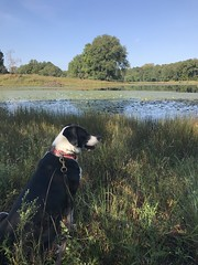 Waiting patiently (leehobbi) Tags: dog pet refuge landscape