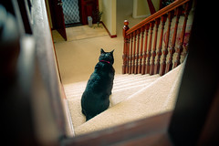 Donald on the stairs 001 (commontropes) Tags: sonya7rii sony a7rii alpha donald cat cats lensbaby burnside 35mm