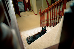 Donald on the stairs 002 (commontropes) Tags: sonya7rii sony a7rii alpha donald cat cats lensbaby burnside 35mm