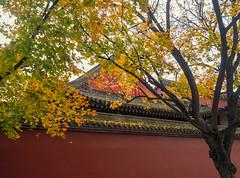Autumn leaves along the Dayanta Wall.jpg (melissaenderle) Tags: architecture shaanxi buddhism autumn xian asia seasons wall weather china religion fall season