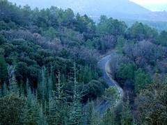 P1020396 (Cassiopée2010) Tags: cévennes nature forêt route