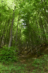 Lost yourself (lauratintori) Tags: nikon nikonphotography nikonphoto mountain trekking green trees tree nature woods forest panorama view pointofview picture pic photography photo ph lauratintoriph lostyourself